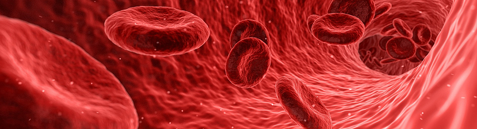 Advancing gene therapy: a cure for haemophilia?